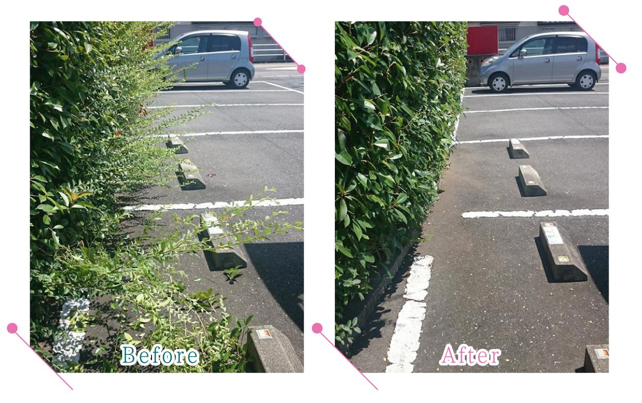 【清掃例】駐車場の剪定