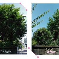 【清掃例】お庭の剪定作業(大分市のハウスクリーニングM&m)