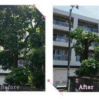 【清掃例】庭木の剪定作業(大分市のハウスクリーニングM&m)