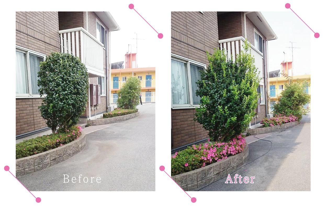 【清掃例】庭木の剪定1