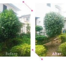 【清掃例】夏の庭 剪定1(大分市のハウスクリーニングM&m)