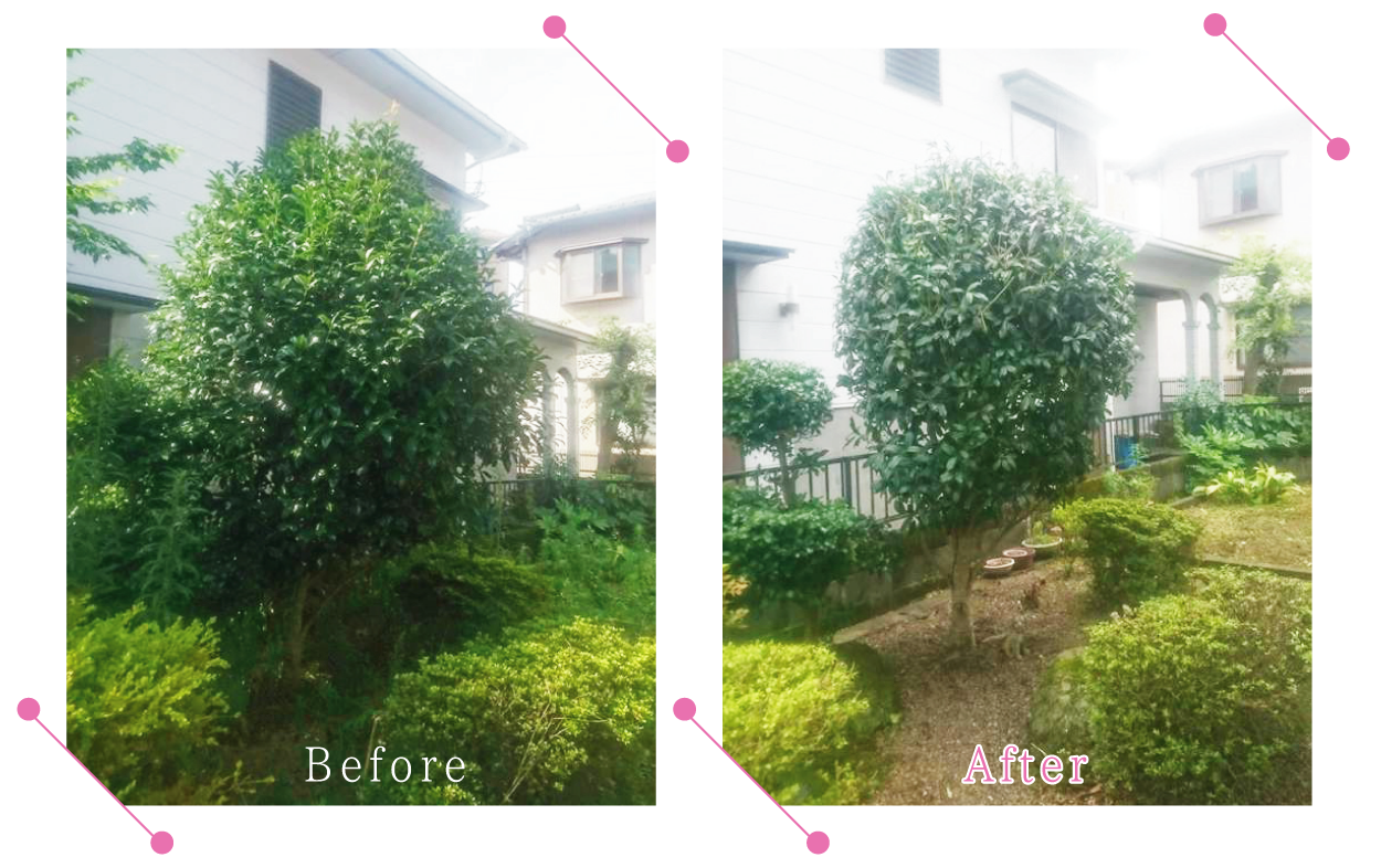 【清掃例】夏の庭 剪定1