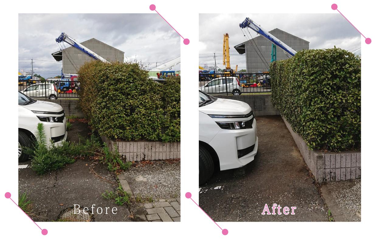 【清掃例】駐車場 剪定・草刈り1