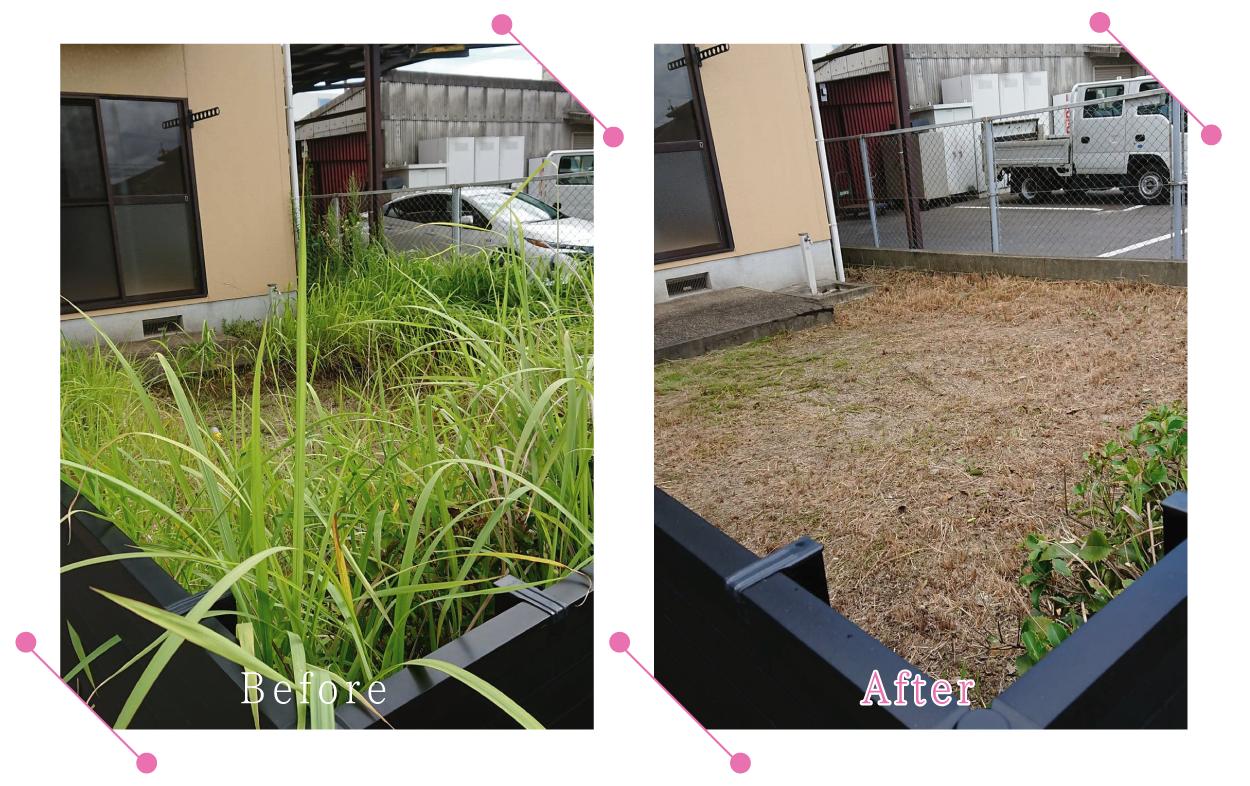 【清掃例】庭 剪定・草刈り1
