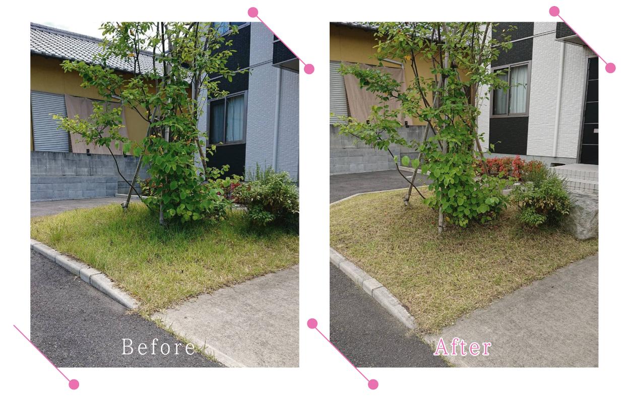 【清掃例】夏の庭 除草・草刈り2