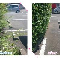 【清掃例】駐車場の剪定(大分市のハウスクリーニングM&m)