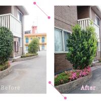 【清掃例】庭木の剪定1(大分市のハウスクリーニングM&m)