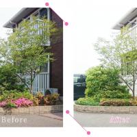 【清掃例】庭木の剪定2(大分市のハウスクリーニングM&m)