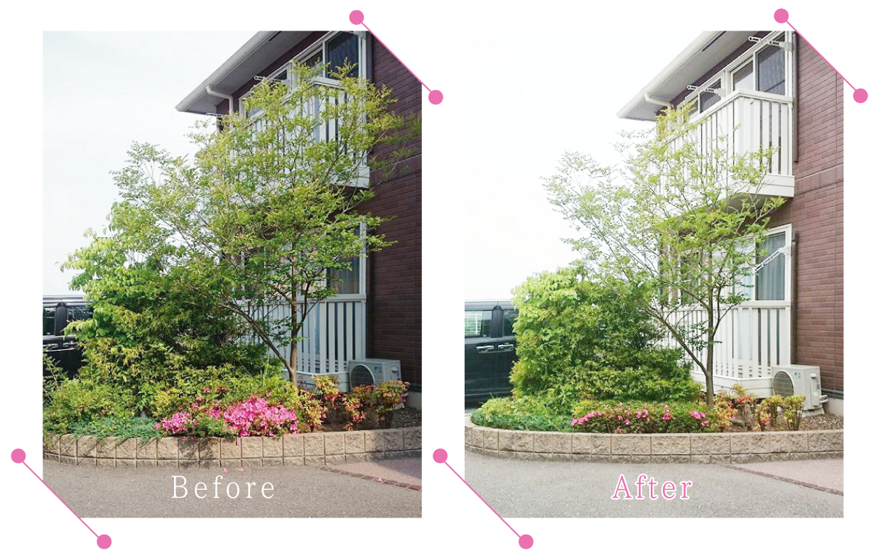 【清掃例】庭木の剪定2
