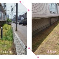 【清掃例】マンション敷地 除草作業(大分市のハウスクリーニングM&m)