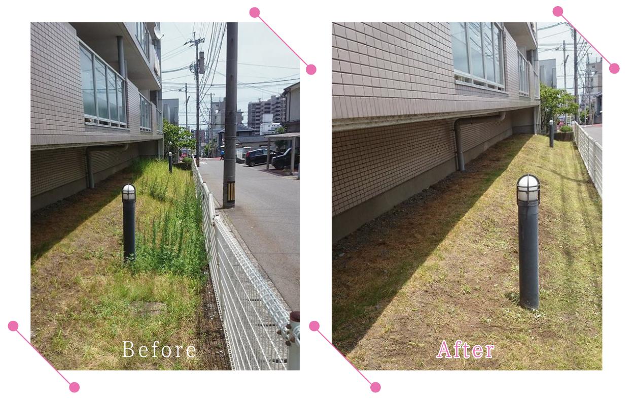 【清掃例】マンション敷地 除草作業