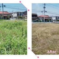 【清掃例】敷地 剪定2(大分市のハウスクリーニングM&m)