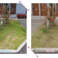 【清掃例】夏の庭 除草・草刈り1(大分市のハウスクリーニングM&m)