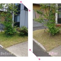 【清掃例】夏の庭 除草・草刈り2(大分市のハウスクリーニングM&m)