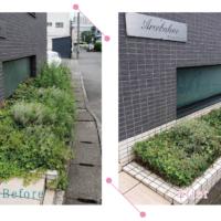 【清掃例】花壇 草刈り(大分市のハウスクリーニングM&m)